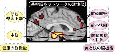 基幹脳ネットワークの活性化